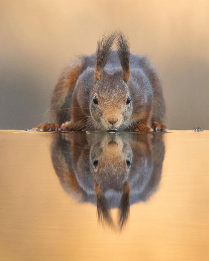 animals photography dick van dujin 3 - Fotógrafo captura momentos preciosos do que acontece na natureza quando ninguém está por perto (30 fotos)