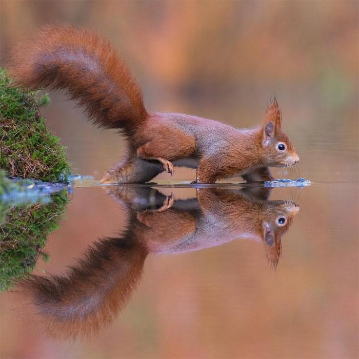 animals photography dick van dujin 6 - Fotógrafo captura momentos preciosos do que acontece na natureza quando ninguém está por perto (30 fotos)