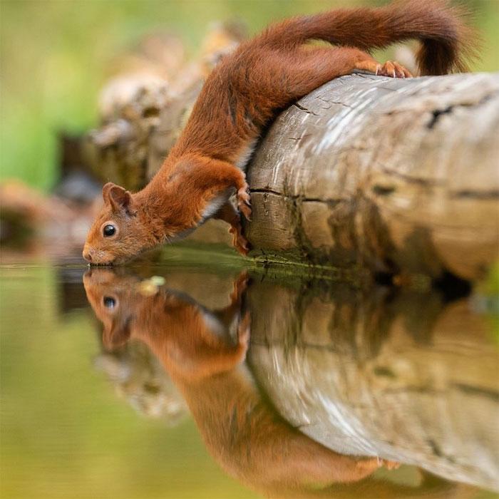 animals photography dick van dujin 9 - Fotógrafo captura momentos preciosos do que acontece na natureza quando ninguém está por perto (30 fotos)