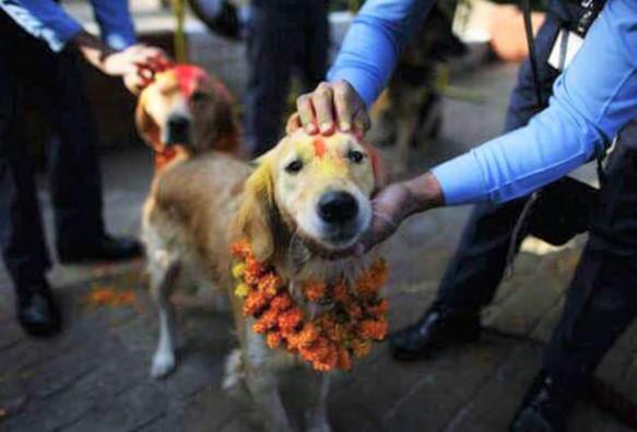 dog 1 - Nepal promove festival anual onde agradece aos cães por serem NOSSOS AMIGOS