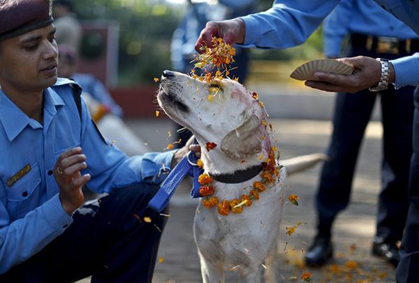 dog 4 - Nepal promove festival anual onde agradece aos cães por serem NOSSOS AMIGOS