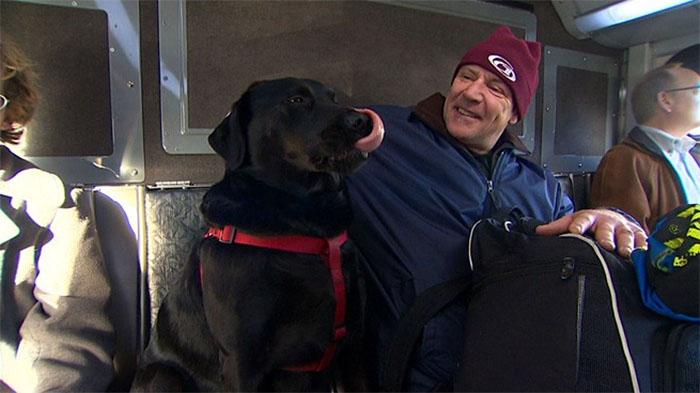 dog rides bus seattle eclipse 5948d579c94b7  700 - Cachorra pega ônibus sozinha todos os dias para ir ao parque!