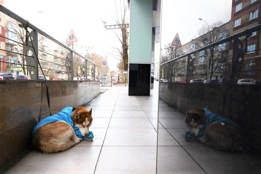 1 2 7 - As pessoas pensam que este cachorro foi abandonado, mas ele espera que sua dono saia do trabalho todos os dias