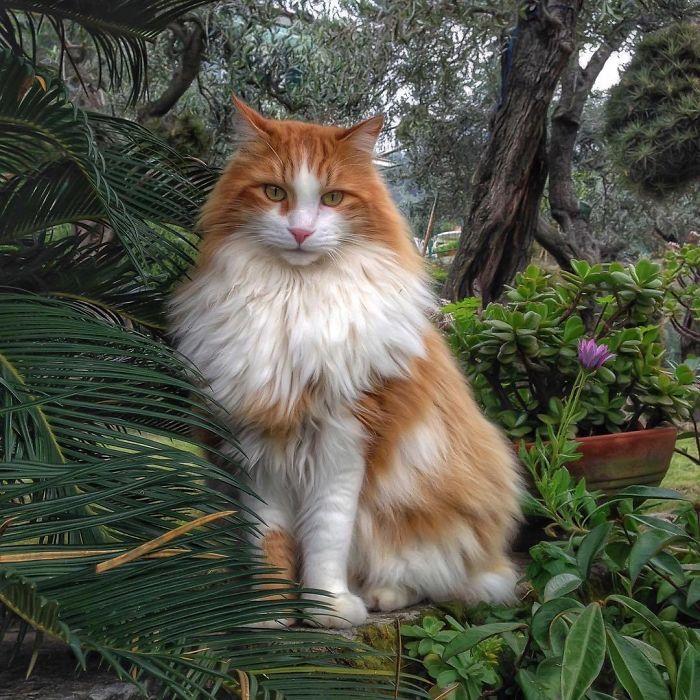 10 3 - Italiana registra a vida preguiçosa de seu gato e as fotos são muito fofas