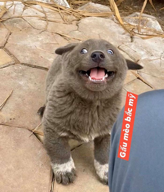 10 - As pessoas estão dizendo que este filhote é uma mistura entre um gato e um cachorro e que tem as expressões muito engraçadas