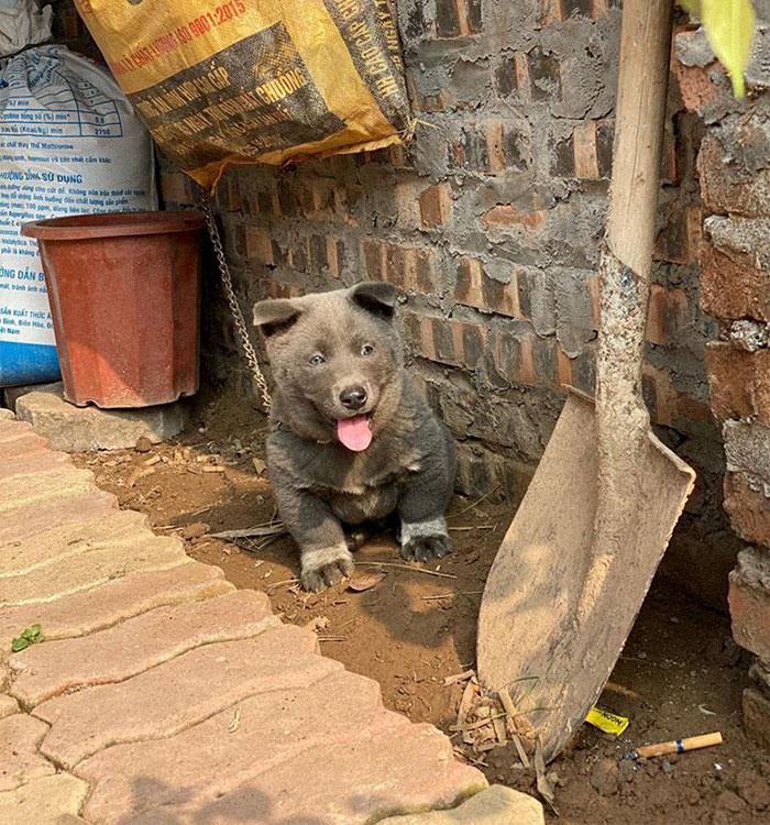 11 - As pessoas estão dizendo que este filhote é uma mistura entre um gato e um cachorro e que tem as expressões muito engraçadas