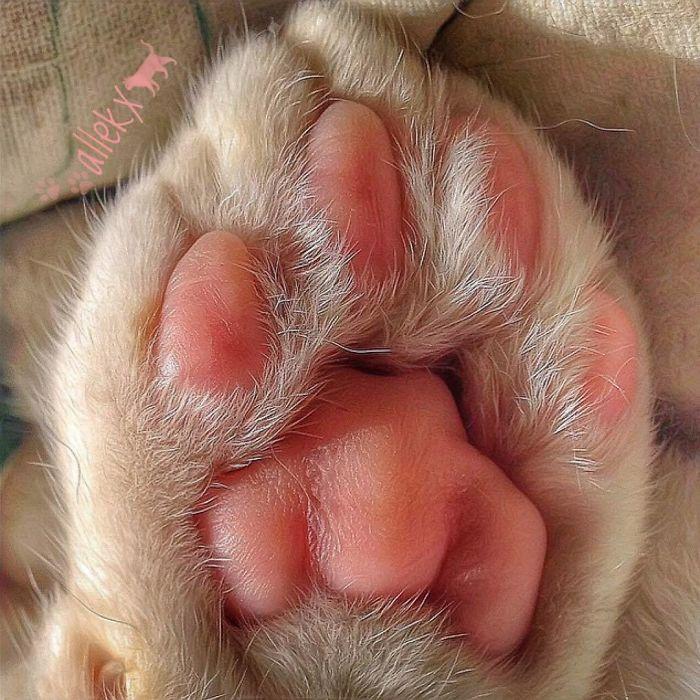 12 3 - Italiana registra a vida preguiçosa de seu gato e as fotos são muito fofas
