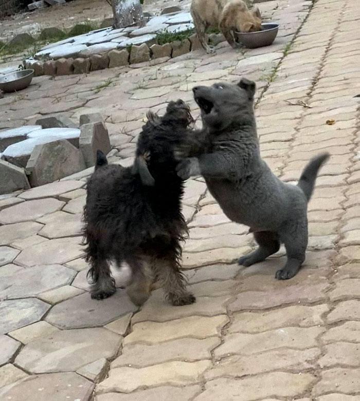 12 - As pessoas estão dizendo que este filhote é uma mistura entre um gato e um cachorro e que tem as expressões muito engraçadas