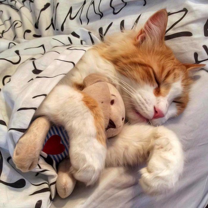 13 3 - Italiana registra a vida preguiçosa de seu gato e as fotos são muito fofas