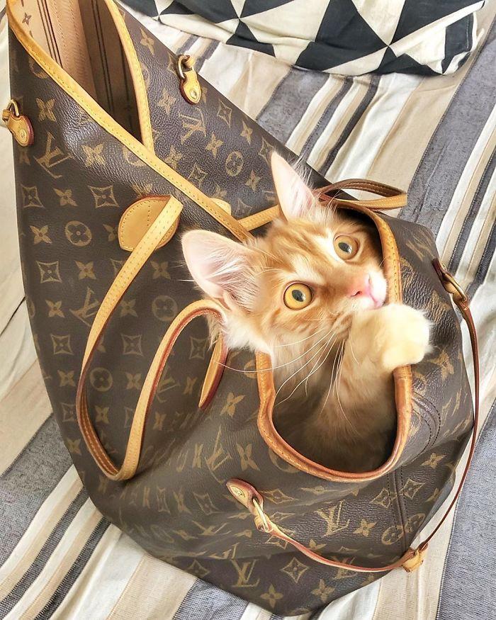 14 2 - Italiana registra a vida preguiçosa de seu gato e as fotos são muito fofas