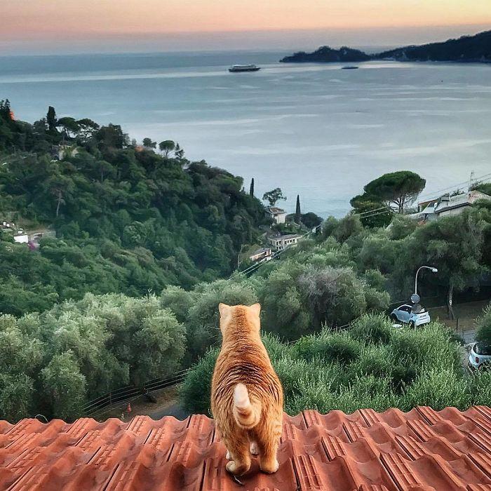 15 2 - Italiana registra a vida preguiçosa de seu gato e as fotos são muito fofas