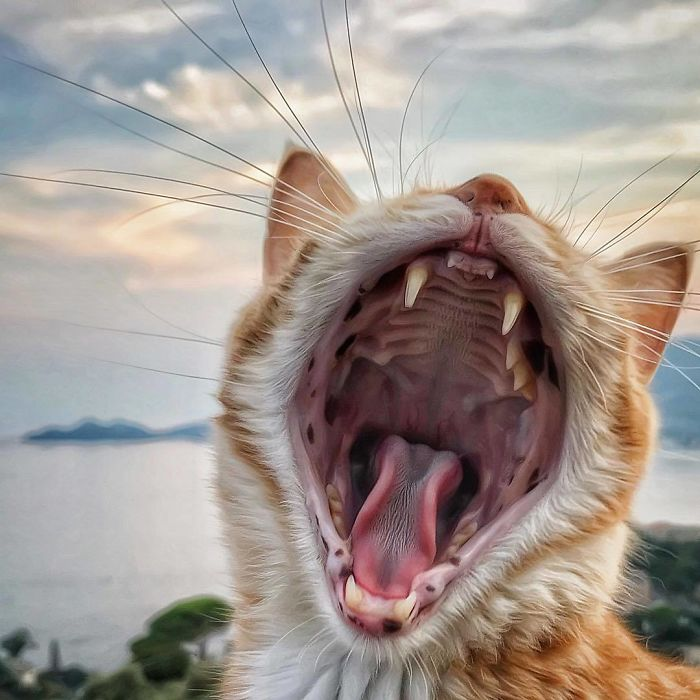 16 2 - Italiana registra a vida preguiçosa de seu gato e as fotos são muito fofas