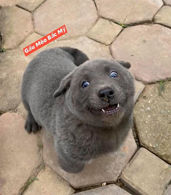 16 - As pessoas estão dizendo que este filhote é uma mistura entre um gato e um cachorro e que tem as expressões muito engraçadas