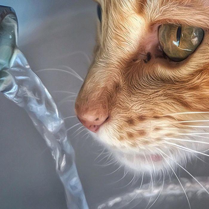 17 2 - Italiana registra a vida preguiçosa de seu gato e as fotos são muito fofas