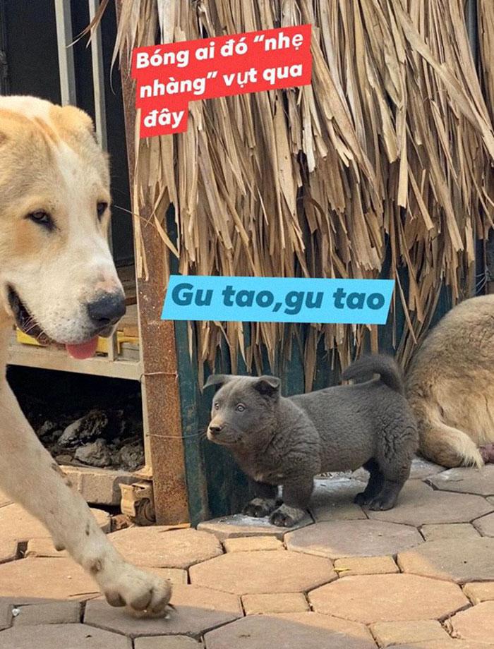 17 - As pessoas estão dizendo que este filhote é uma mistura entre um gato e um cachorro e que tem as expressões muito engraçadas