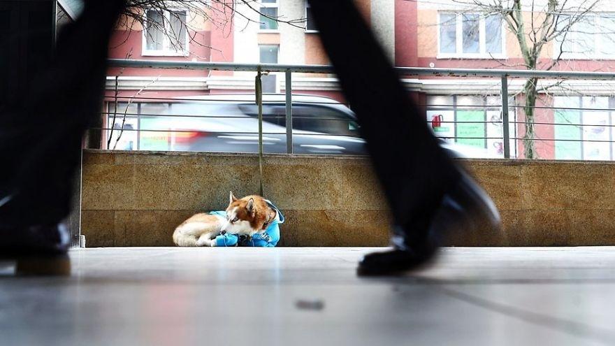 2 2 5 - As pessoas pensam que este cachorro foi abandonado, mas ele espera que sua dono saia do trabalho todos os dias