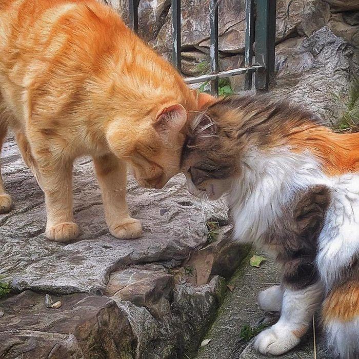 2 2 7 - Italiana registra a vida preguiçosa de seu gato e as fotos são muito fofas