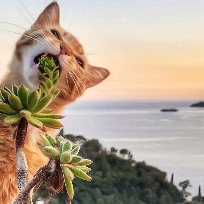 20 1 - Italiana registra a vida preguiçosa de seu gato e as fotos são muito fofas