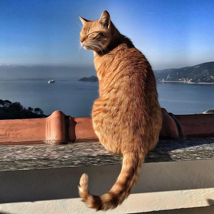 23 - Italiana registra a vida preguiçosa de seu gato e as fotos são muito fofas