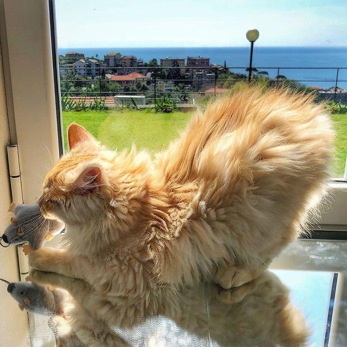 24 1 - Italiana registra a vida preguiçosa de seu gato e as fotos são muito fofas