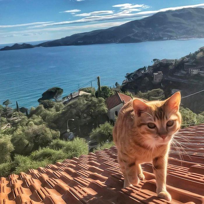 25 1 - Italiana registra a vida preguiçosa de seu gato e as fotos são muito fofas