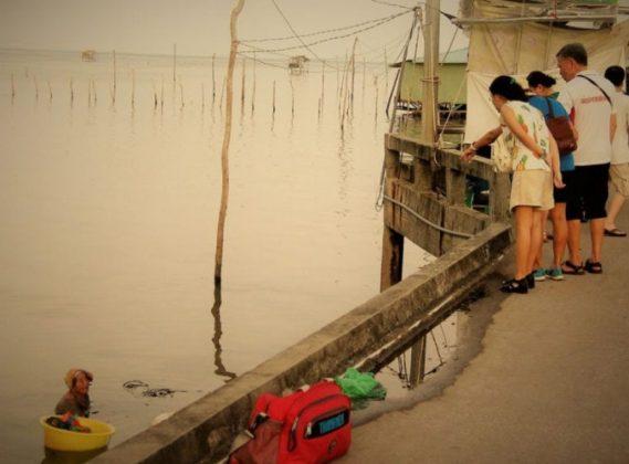 3 1 1 - Mãe de 85 anos pesca o dia todo para comprar remédios para sua filha doente