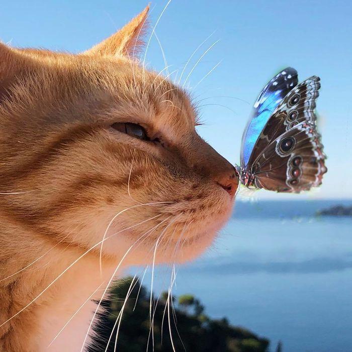 3 1 8 - Italiana registra a vida preguiçosa de seu gato e as fotos são muito fofas