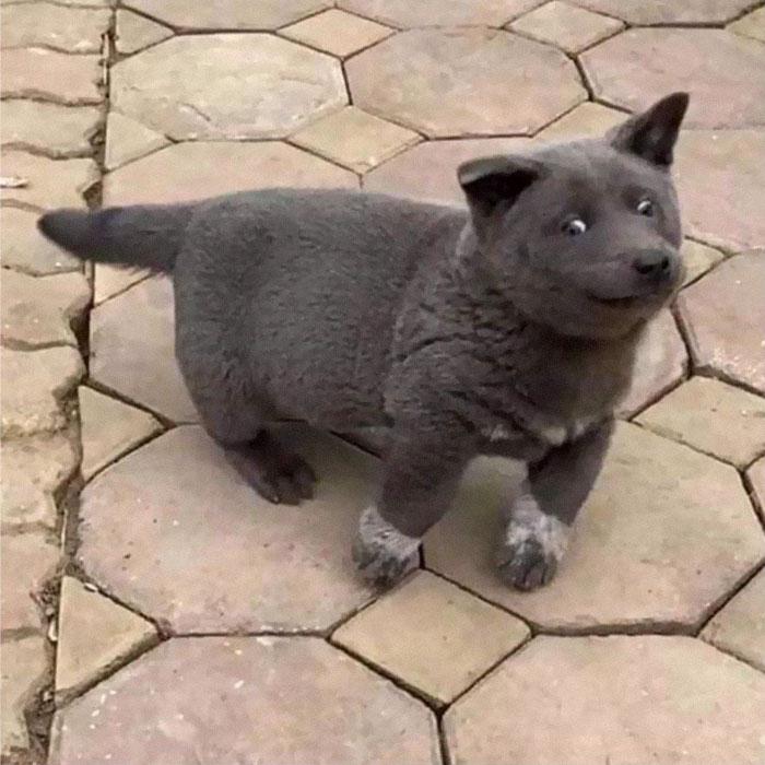 4 2 - As pessoas estão dizendo que este filhote é uma mistura entre um gato e um cachorro e que tem as expressões muito engraçadas