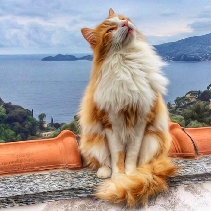 4 6 - Italiana registra a vida preguiçosa de seu gato e as fotos são muito fofas