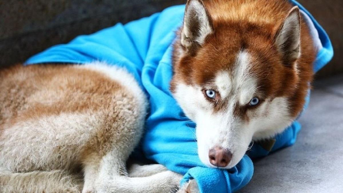5 1 3 - As pessoas pensam que este cachorro foi abandonado, mas ele espera que sua dono saia do trabalho todos os dias