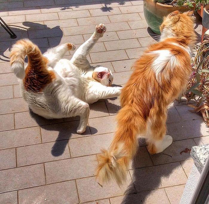 5 1 5 - Italiana registra a vida preguiçosa de seu gato e as fotos são muito fofas