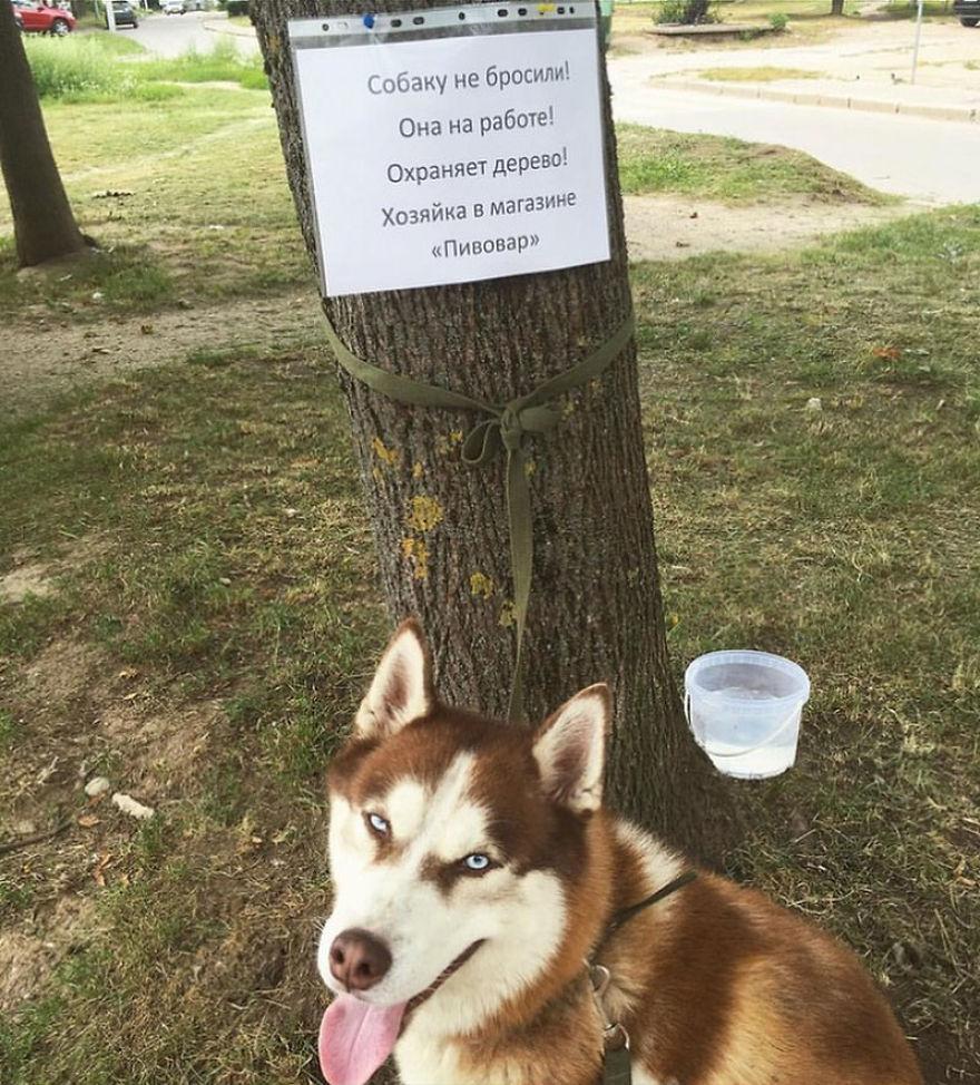 6 3 - As pessoas pensam que este cachorro foi abandonado, mas ele espera que sua dono saia do trabalho todos os dias