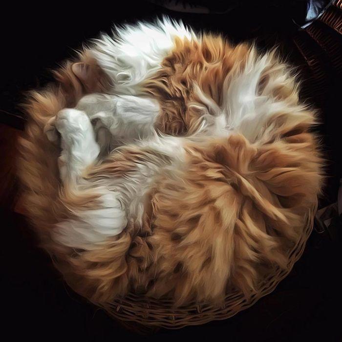 6 5 - Italiana registra a vida preguiçosa de seu gato e as fotos são muito fofas