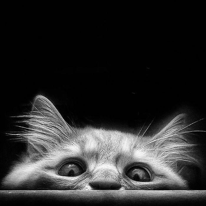 7 1 4 - Italiana registra a vida preguiçosa de seu gato e as fotos são muito fofas