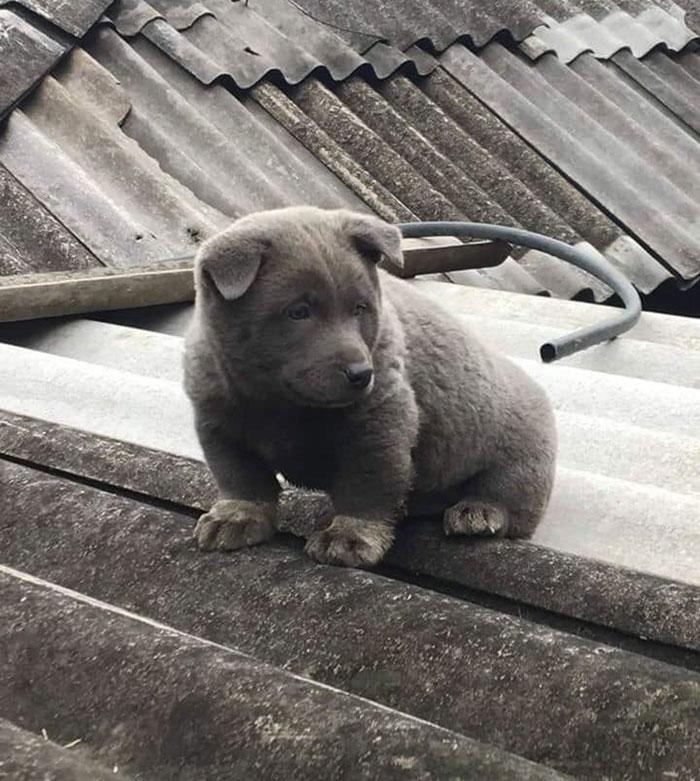 7 1 - As pessoas estão dizendo que este filhote é uma mistura entre um gato e um cachorro e que tem as expressões muito engraçadas
