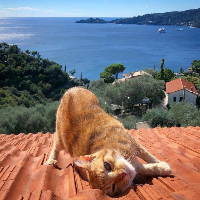 8 3 - Italiana registra a vida preguiçosa de seu gato e as fotos são muito fofas