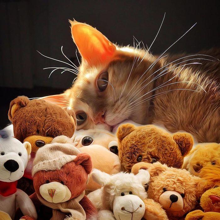 9 3 - Italiana registra a vida preguiçosa de seu gato e as fotos são muito fofas