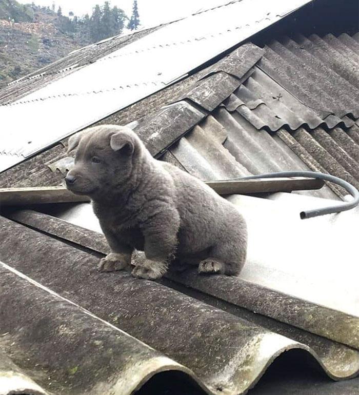 9 - As pessoas estão dizendo que este filhote é uma mistura entre um gato e um cachorro e que tem as expressões muito engraçadas