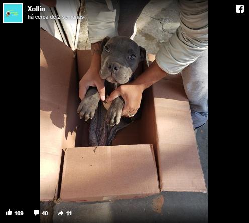 Xollim - Criança deixa cãozinho em abrigo para protege-lo das violências do pai e carta comovente viraliza