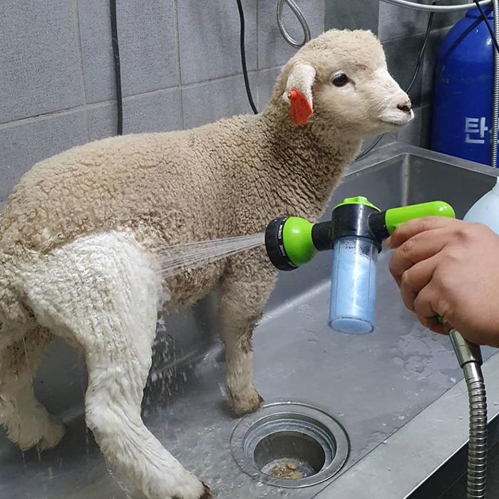 """a 2 - """"Nature Café"""" para quem ama ovelhas e café - Confira!"""