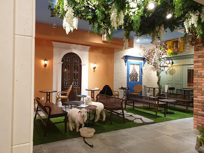 """d 1 - """"Nature Café"""" para quem ama ovelhas e café - Confira!"""