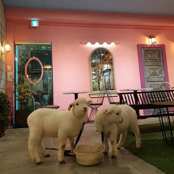"""f - """"Nature Café"""" para quem ama ovelhas e café - Confira!"""