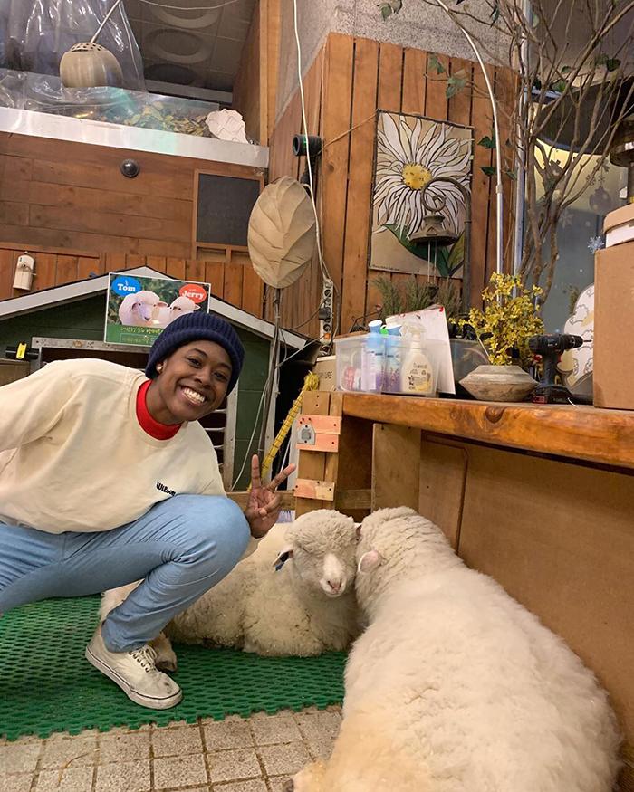 """j - """"Nature Café"""" para quem ama ovelhas e café - Confira!"""