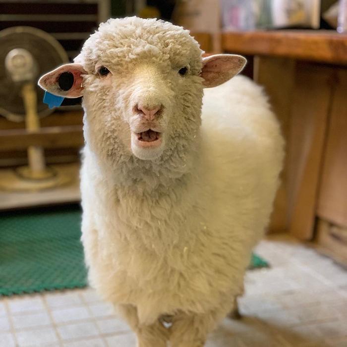 """k - """"Nature Café"""" para quem ama ovelhas e café - Confira!"""