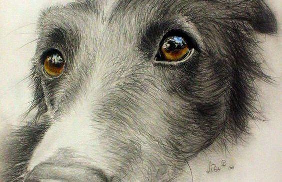 mirada perro - Os olhos de um animal têm o poder de falar uma língua única: a do sentimento
