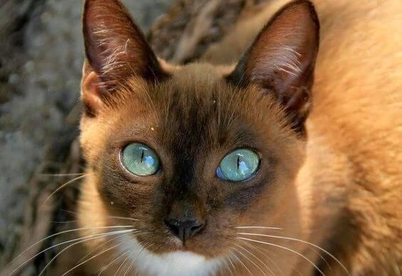 ojos gato - Os olhos de um animal têm o poder de falar uma língua única: a do sentimento