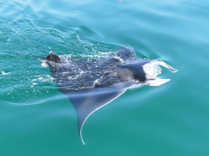 0000 164 - Golfinhos, pássaros e raias retornam à zona hoteleira de Holbox, no México. A natureza comemora a ausência do homem!
