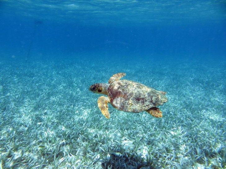 0000 165 - Golfinhos, pássaros e raias retornam à zona hoteleira de Holbox, no México. A natureza comemora a ausência do homem!