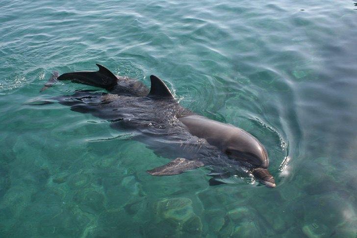 0000 166 - Golfinhos, pássaros e raias retornam à zona hoteleira de Holbox, no México. A natureza comemora a ausência do homem!