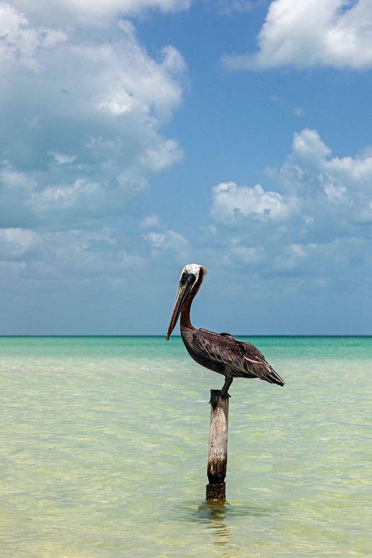 0000 167 - Golfinhos, pássaros e raias retornam à zona hoteleira de Holbox, no México. A natureza comemora a ausência do homem!